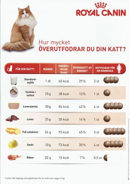 En tabell som visar på hur mycket energi olika smakbitar av människomat innebär för katt. T.ex. att två ostskivor motsvarar fem kanelbullar för en människa.